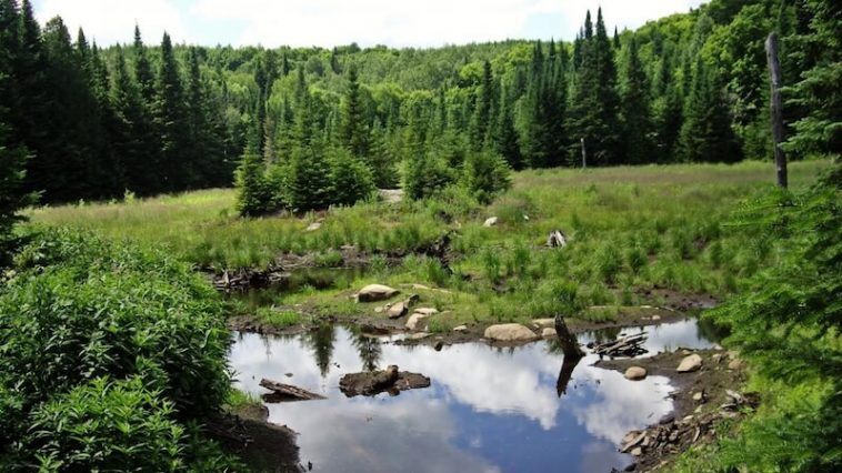 lac foret