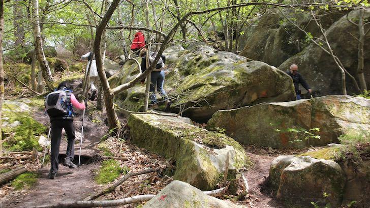 25 bosses de Fontainebleau