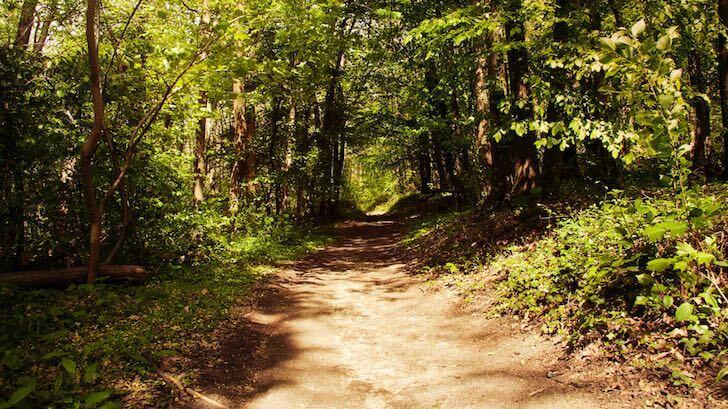 Forêt de l'Hautil