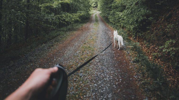 chien randonnée